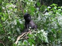 Jak jsem potkala gorily horské